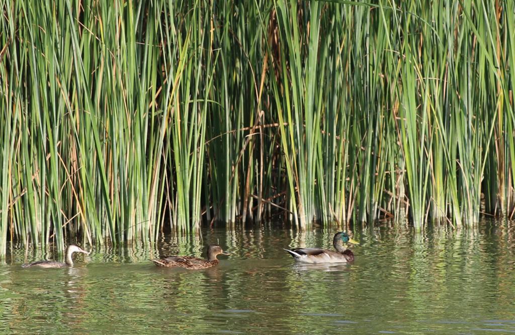 Delta de l'Ebre, ornitologia, birdwatching, turisme, casa rural