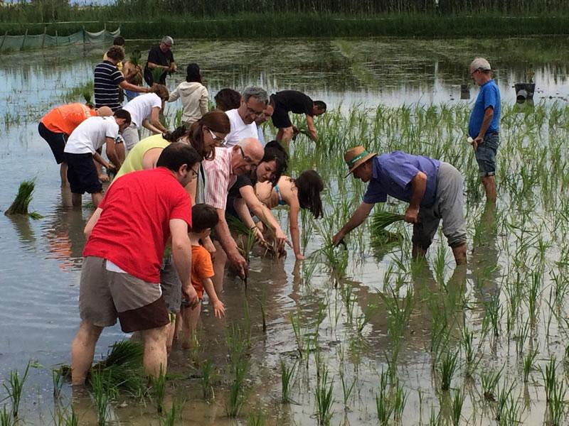 Safari ecocultural al Delta del l'Ebre